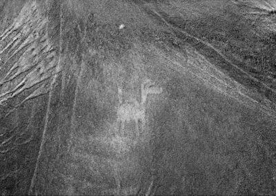 Geoglifo Camélido en Cerro Negro